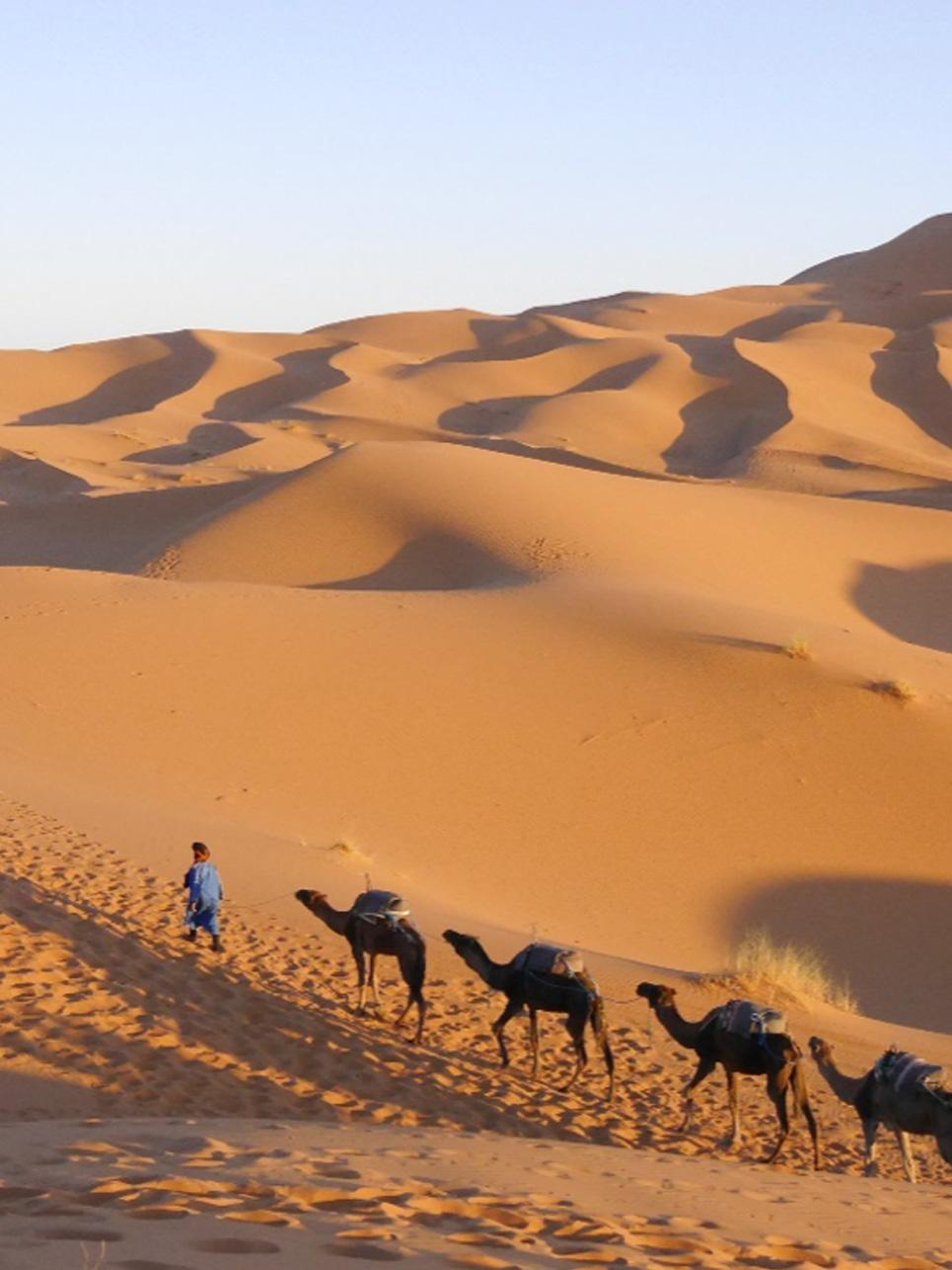 Begegnung des Tages: Genauso habe ich mir die Sahara immer vorgestellt. Tromedare und ganz viel Sand!