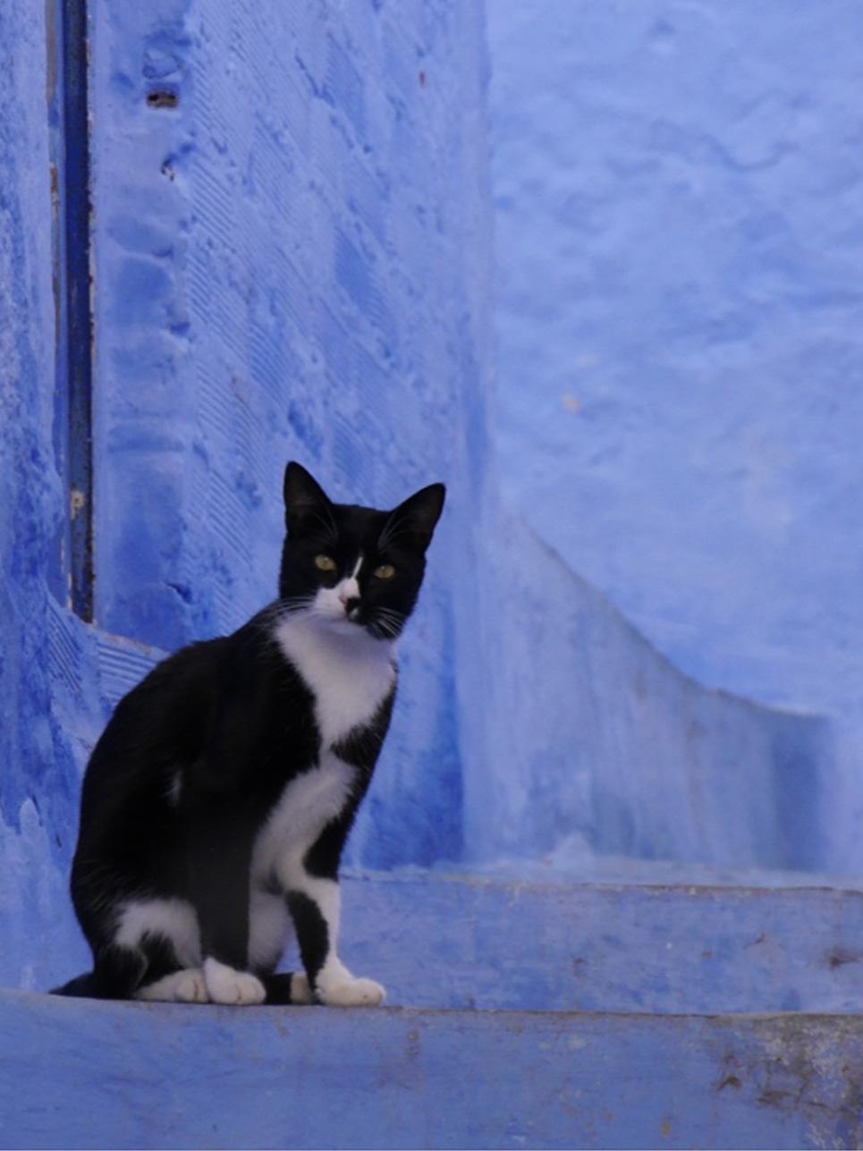 """Erkenntnis des Tages: Badreiniger kann auch wunderbar als Desinfektionsmittel herhalten. Dies ist zumindest die Meinung unseres Gastgebers: Nach einem Kratzer durch eine Katze wurde die kleine Wunde mit Badreiniger """"desinfiziert"""". (Das Bild ist in Chefchaouen entstanden)"""